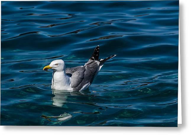 Elba Island - Solitary Bird - Ph Enrico Pelos Greeting Card