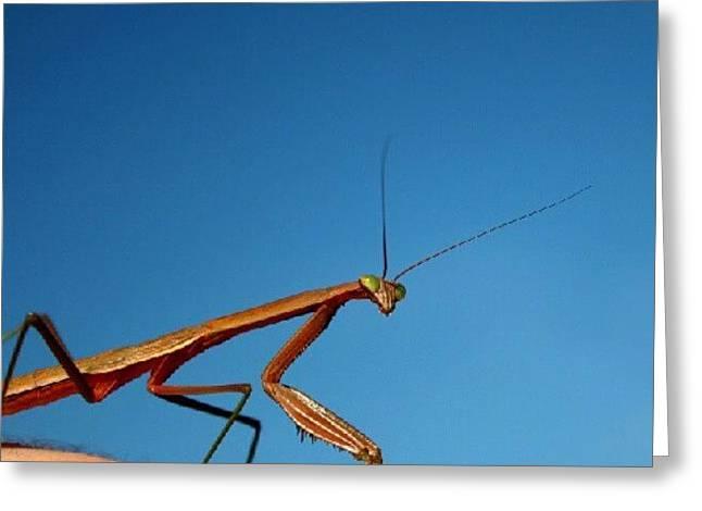 Elbow Mantis Greeting Card