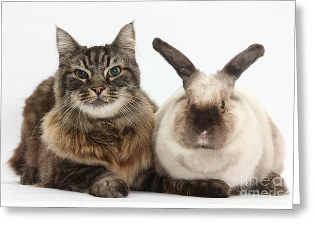 Elderly Cat With Colorpoint Rabbit Greeting Card by Mark Taylor