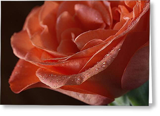 Greeting Card featuring the photograph Elegance  by Shirley Mitchell