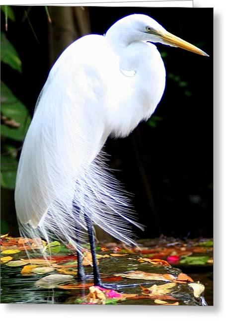 Elegant Egret At Water's Edge Greeting Card