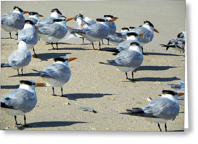 Elegant Terns Enjoying The Beach Greeting Card by Suzie Banks