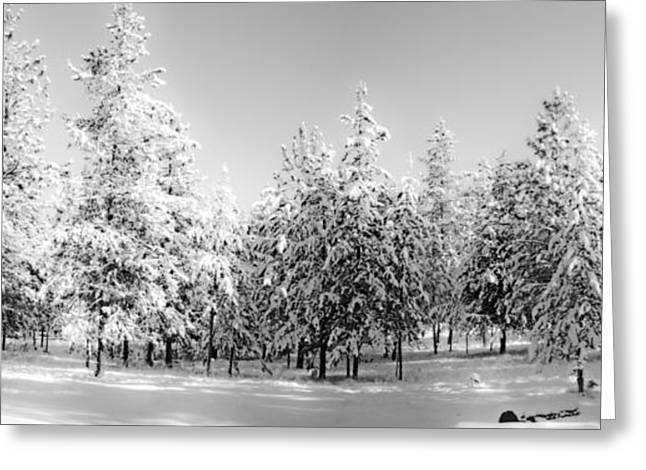 Greeting Card featuring the photograph Elegant Wonderland by Janie Johnson