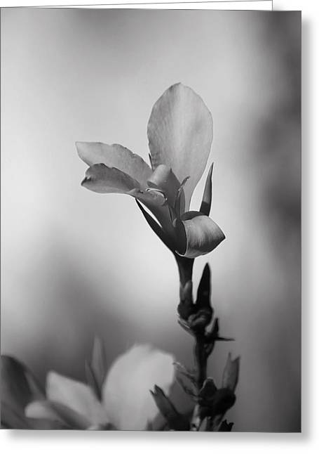 Elegantly Greeting Card by Laurie Search