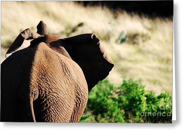 Elephant And His Butt Greeting Card by Alexandra Jordankova