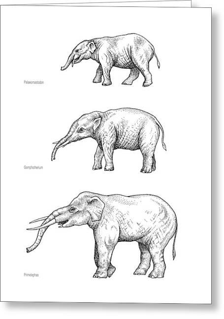 Elephant Evolution, Artwork Greeting Card