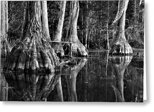 Greeting Card featuring the photograph Elephant Feet by Dan Wells