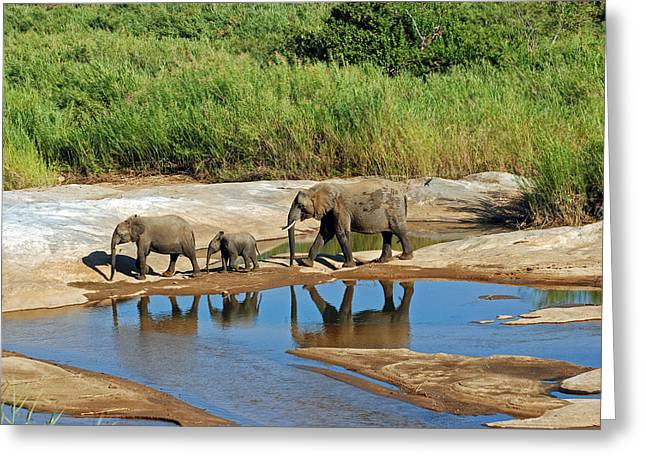 Elephant Reflections And The Sand River Greeting Card