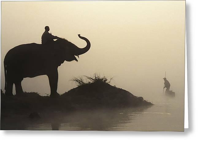 Elephant Silhouette Greeting Card by Sean White