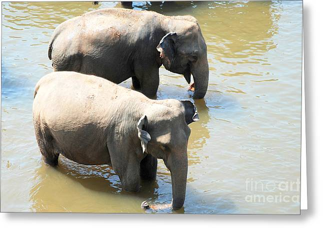 Greeting Card featuring the photograph Elephants In Water by Pravine Chester