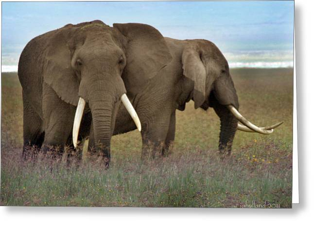 Elephants Of The Crater Greeting Card by Joseph G Holland