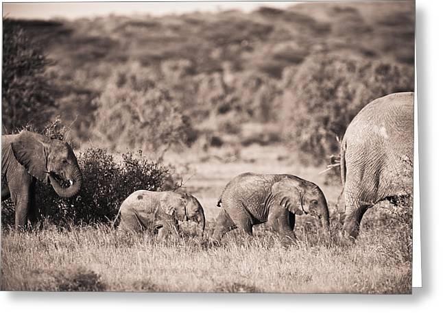 Elephants Walking In A Row Samburu Kenya Greeting Card by David DuChemin