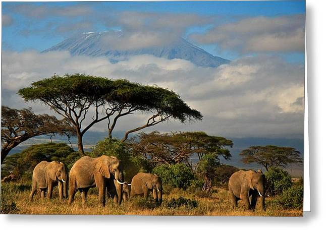 Elephantskenya Greeting Card by Mickey Mouse