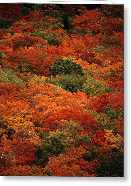 Elevated View Of Autumn Foliage Greeting Card by Raymond Gehman