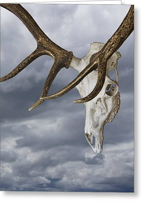 Elk Skull With Rack Against A Cloudy Sky Greeting Card by Randall Nyhof