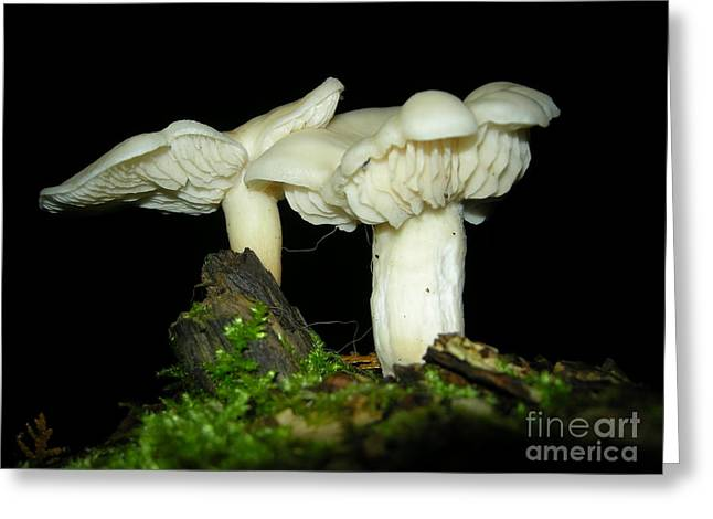 Elm Oysters Greeting Card
