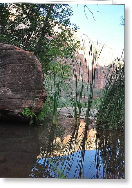 Emerald Pool- Zion National Park Greeting Card by Michael Bartlett