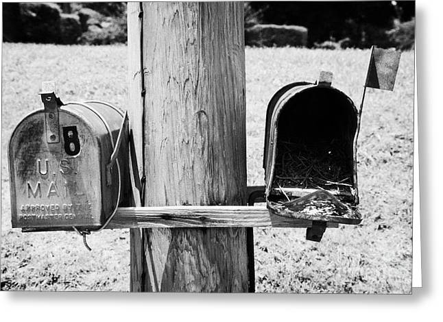 empty old used american private mailboxes one with birdsnest in Lynchburg tennessee usa Greeting Card by Joe Fox
