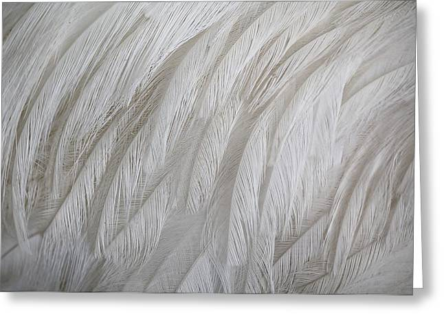 Emu Feathers Greeting Card by Paulette Thomas