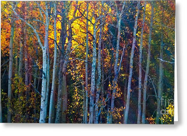 Enchanted Aspen Greeting Card