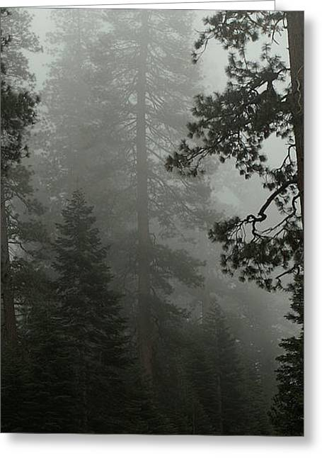 Enchanted Forest Cropped Greeting Card