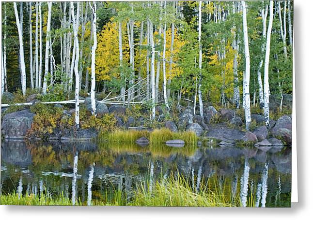 Enchanted Forest Panorama Greeting Card by Kate Sumners