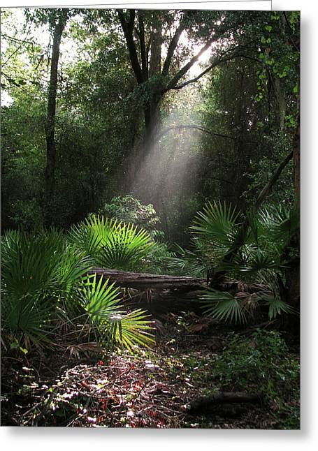 Enchanted Forest Greeting Card by Peg Urban