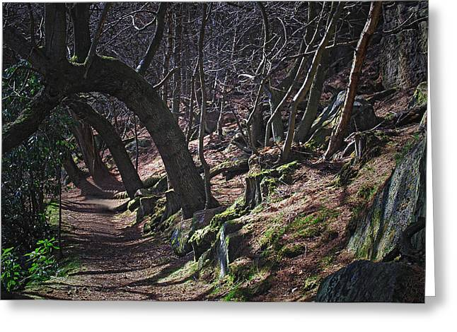 Enchanted Forest Greeting Card by Steve Watson