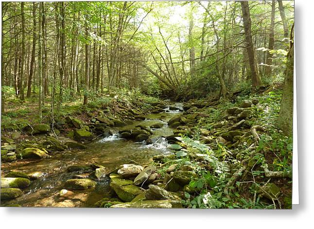 Enchanted Stream Greeting Card