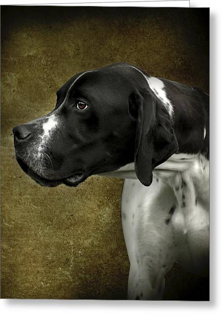 Greeting Card featuring the photograph English Pointer Dog Portrait by Ethiriel  Photography