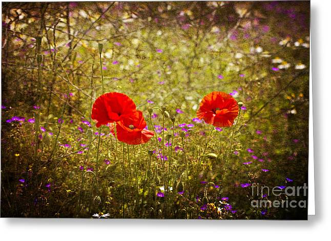 English Summer Meadow. Greeting Card