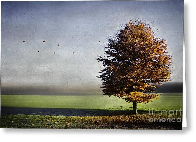 Enjoying The Autumn Sun Greeting Card by Hannes Cmarits