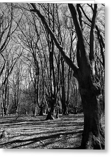 Epping Forest Greeting Card by David Pyatt