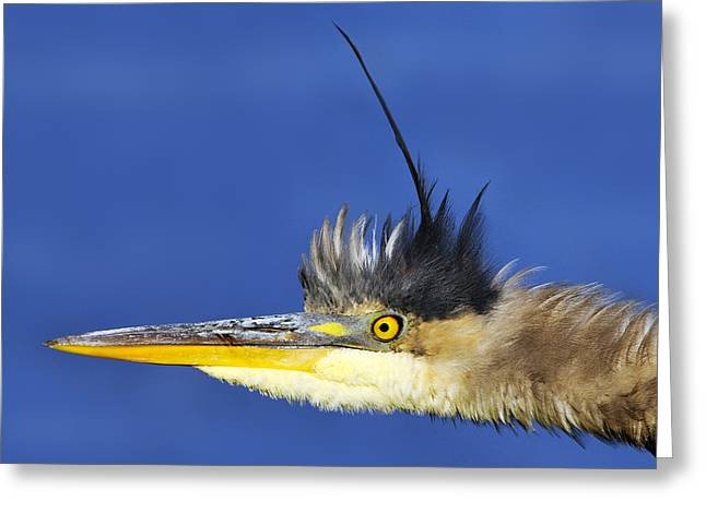 Erect Greeting Card by Tony Beck