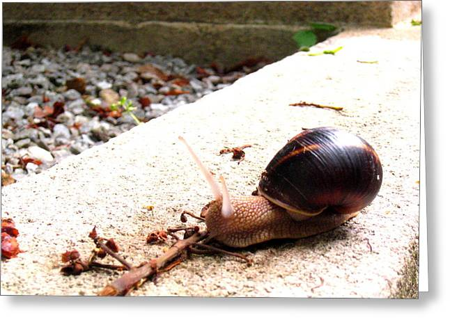Greeting Card featuring the photograph Escargot by Rosemarie Hakim