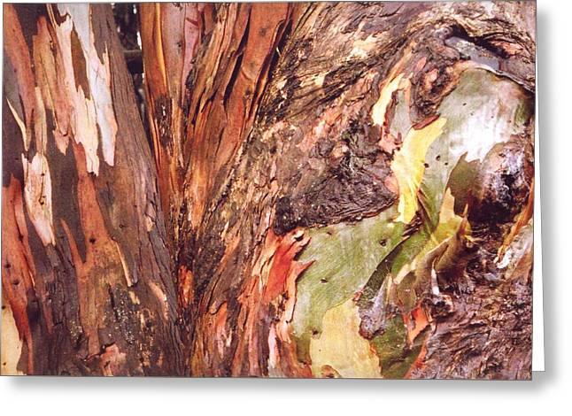 Greeting Card featuring the photograph Eucalyptus Tree by Cynthia Marcopulos