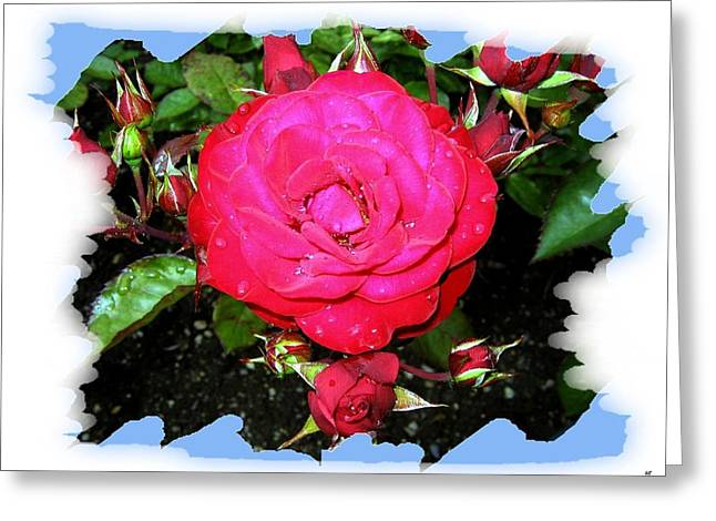 Europeana Roses And Raindrops Greeting Card by Will Borden
