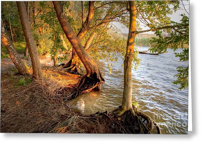 Evening At The Lake Greeting Card by Heiko Koehrer-Wagner