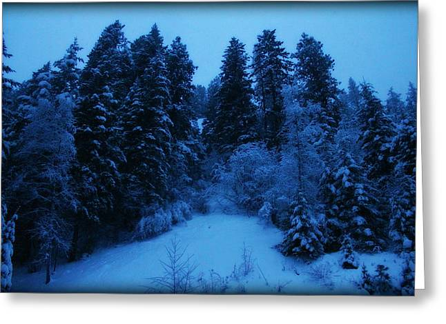 Evening Blue Greeting Card by Donna Duckworth