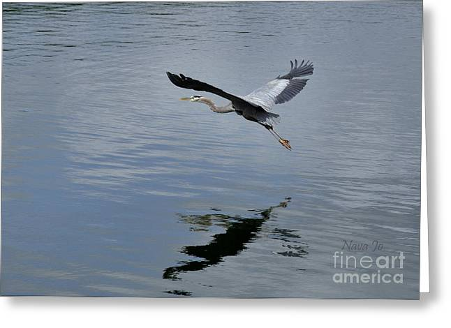 Greeting Card featuring the photograph Evening Flight Reflection by Nava Thompson