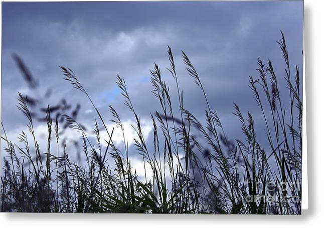 Evening Grass Greeting Card by Elena Elisseeva