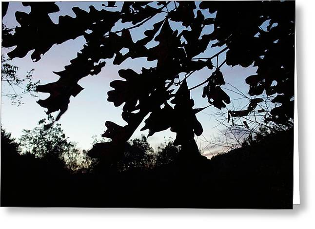 Evening Silhouette Greeting Card by Angelika MacDonald