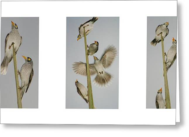 Evening Song Birds Trio Greeting Card