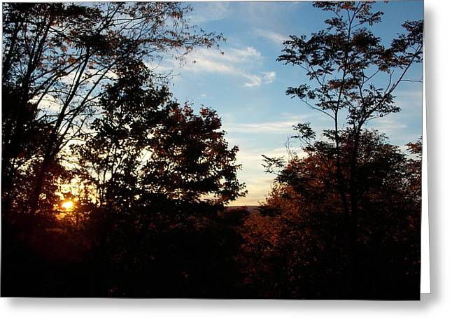 Evening Through The Trees Greeting Card by Angelika MacDonald