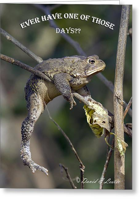 Ever Have One Of Those Days Greeting Card by David Lester