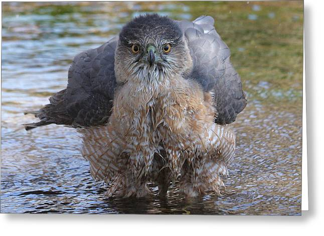 Excuse Me But I Am Bathing Here. Greeting Card by Doris Potter