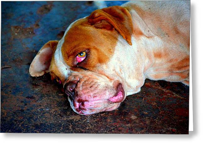 Exhausted Greeting Card by Paulo Zerbato