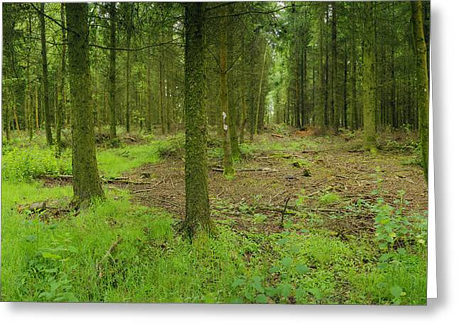 Exmoor Forest Greeting Card by Jan W Faul