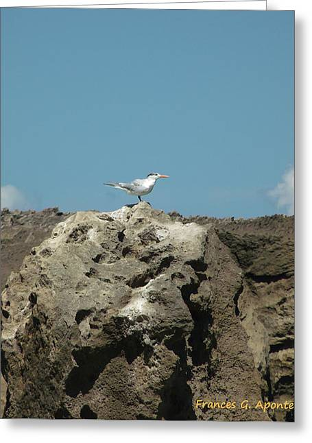 Exoctic Birds Greeting Card by Frances G Aponte