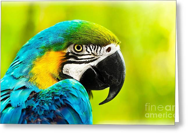 Exotic Colorful African Macaw Parrot Greeting Card by Anna Om